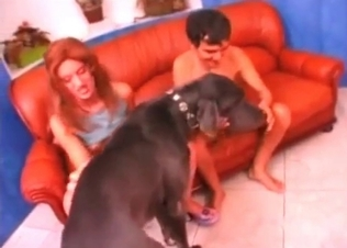Couple is playing with a boxer